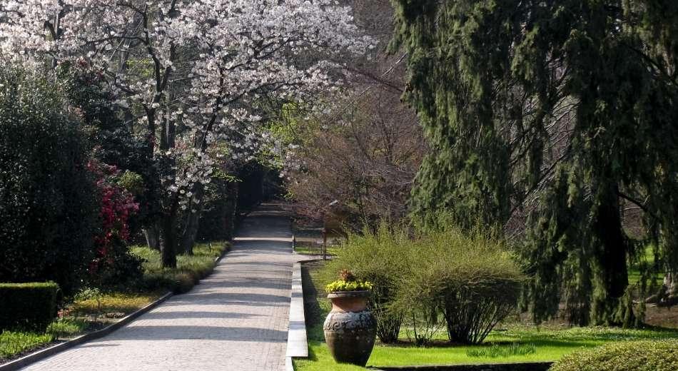 Wir pflegen und beschneiden die Bäume in botanischen Gärten.