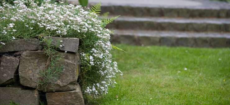 Schröer Garten- und Landschaftsbau pflegt alle Böden.