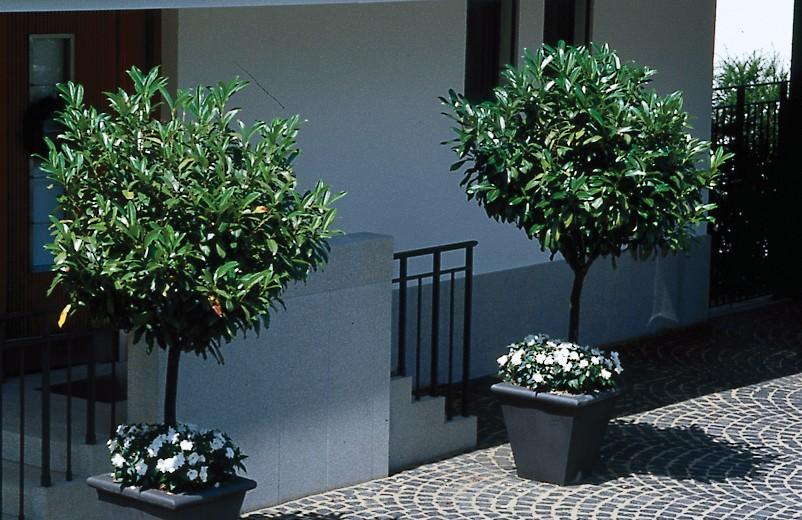 Schröer Garten- und Landschaftsbau Gartenideen zeigt einen Parkplatz mit zwei Bäumen im Topf