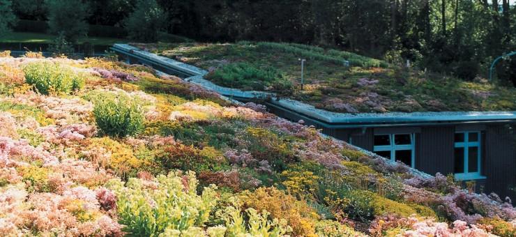 Gartengestaltung Dachbegrünung