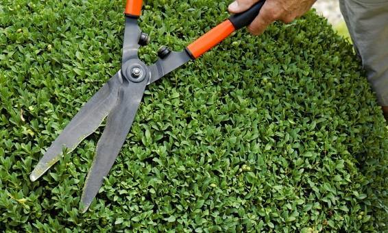 Schröer Garten- und Landschaftsbau schneidet einen Busch rund zu