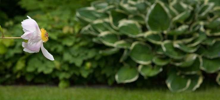 Schröer Garten- und Landschaftsbau ist ihr Experte für alle Pflanzen.